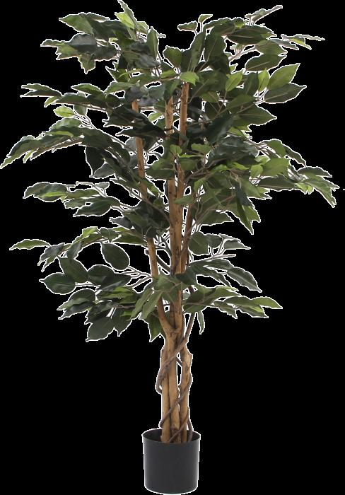 Silkkikasvi Ficus Benjamina 110 cm
