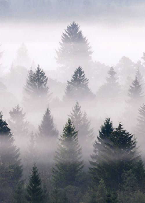 Sisustustaulu Reinders Misty Woods