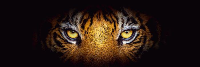 Sisustustaulu Reinders Eye of the Tiger