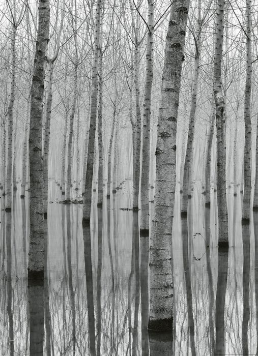 Fototapetti Birch Forest In The Water 2 paneelia