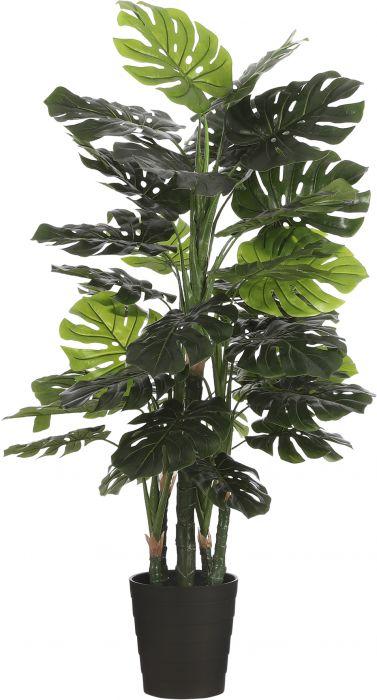Silkkikasvi Peikonlehti Monstera 140 cm