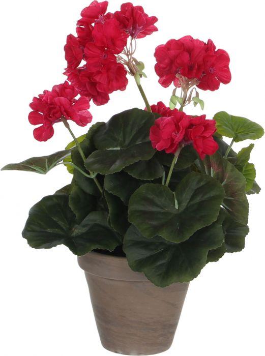 Silkkikasvi pelargonia 11,5 cm tummapinkki