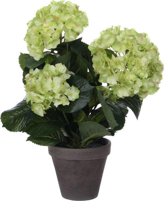 Silkkikasvi Hortensia 13,5 cm vihreä