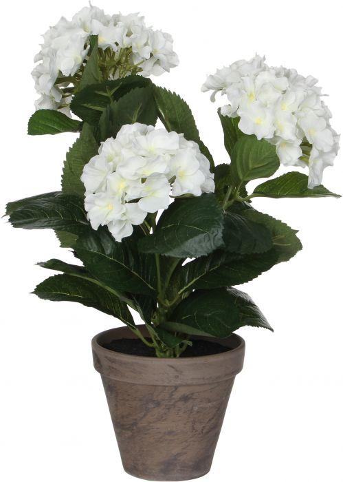 Silkkikasvi Hortensia 13,5 cm valkoinen
