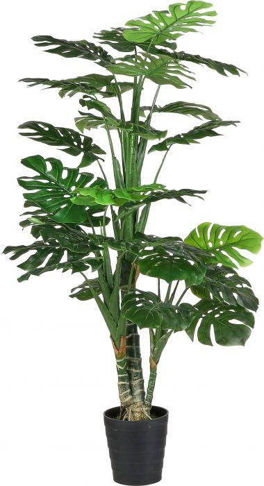 Silkkikasvi Peikonlehti Monstera 160 cm