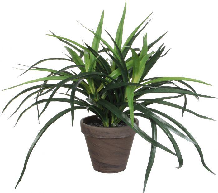 Silkkikasvi Traakkipuu Dracaena 40 cm