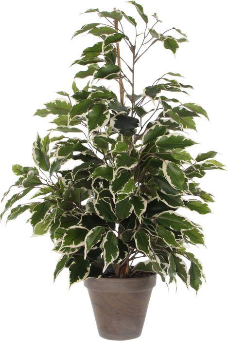 Silkkikasvi Ficus Ecotica 65 cm