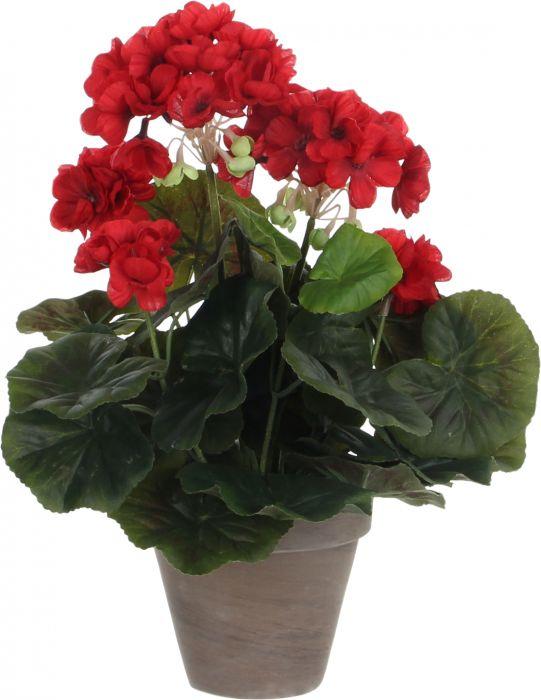 Silkkikasvi pelargonia P11,5 cm punainen