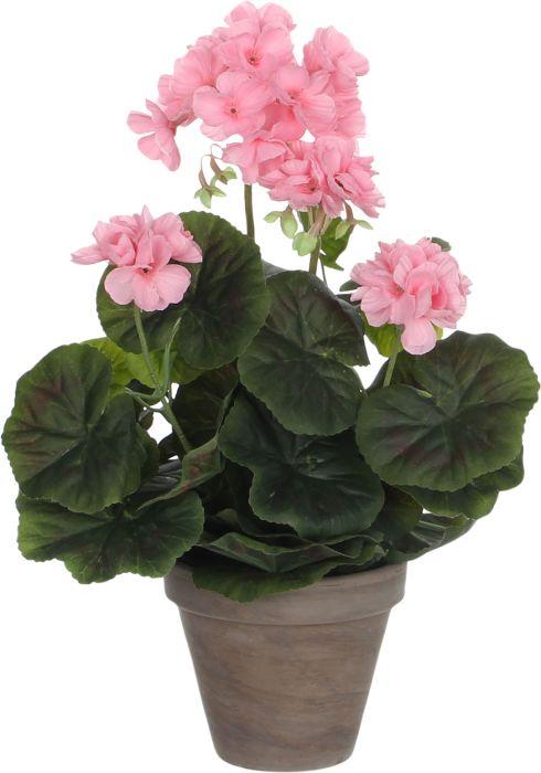 Silkkikasvi pelargonia P11,5 cm vaaleanpunainen