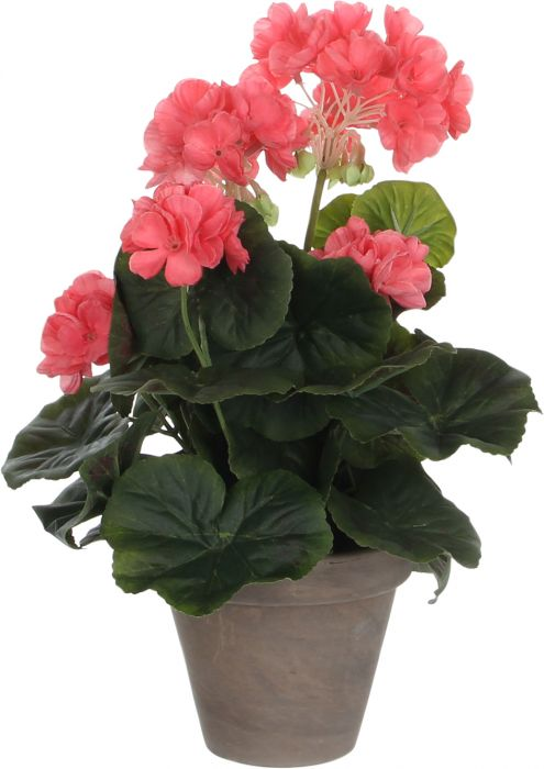 Silkkikasvi pelargonia P11,5 cm lohenpunainen