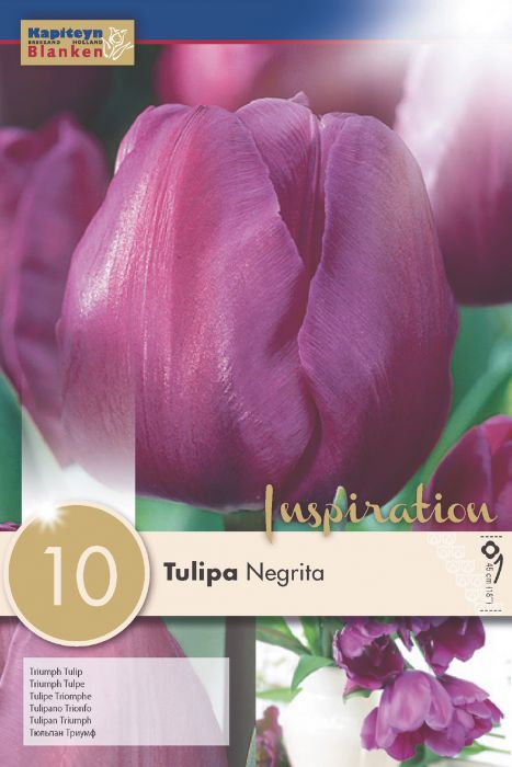 Syyskukkasipuli Tulppaani Triumph Negrita 10 kpl