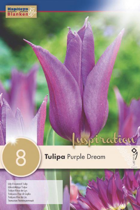 Syyskukkasipuli Tulppaani Purple Dream 8 kpl