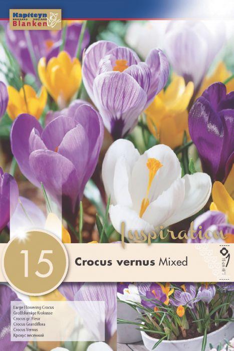 Syyskukkasipuli Krookus Vernus Mix 15 kpl