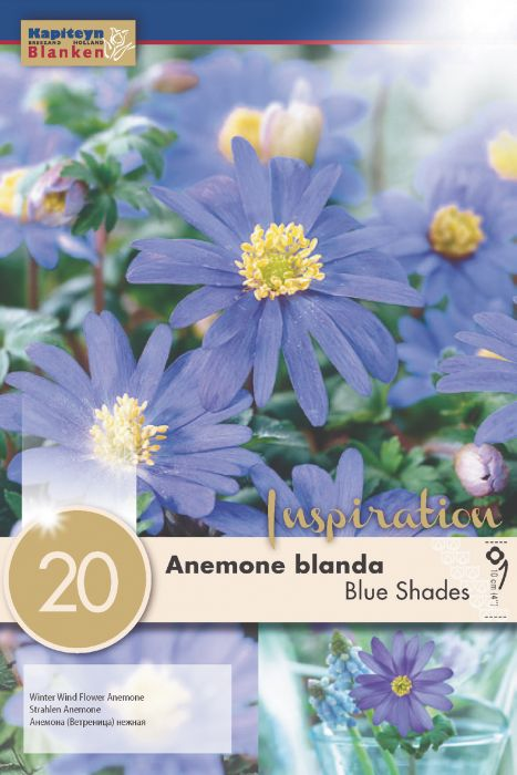 Syyskukkasipuli Balkaninvuokko Anemone Blanda Blue Shades 20 kpl