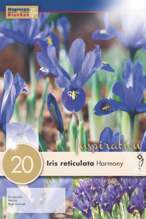 Syyskukkasipuli Kevätkurjenmiekka Iris Reticulata 20 kpl