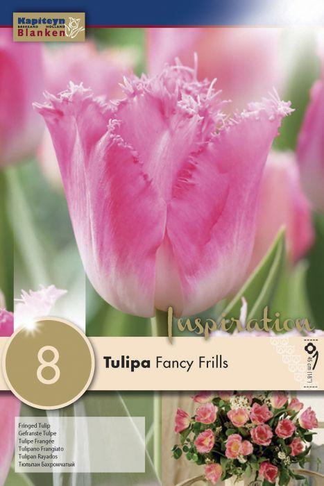 Syyskukkasipuli Tulppaani Fancy Frills 8 kpl