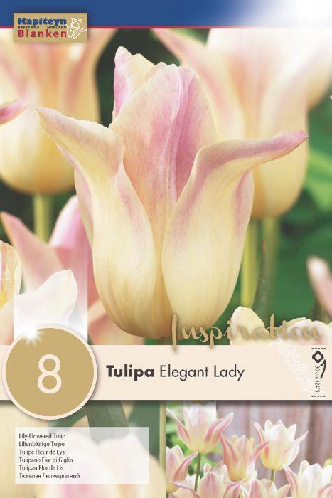 Syyskukkasipuli Tulppaani Elegant Lady 8 kpl