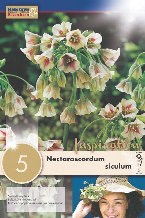 Syyskukkasipuli Hajulaukka Siculum Nectaroscordum 5 kpl