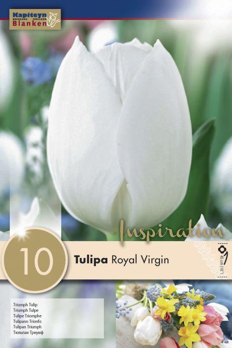 Syyskukkasipuli Tulppaani Royal Virgin 10 kpl