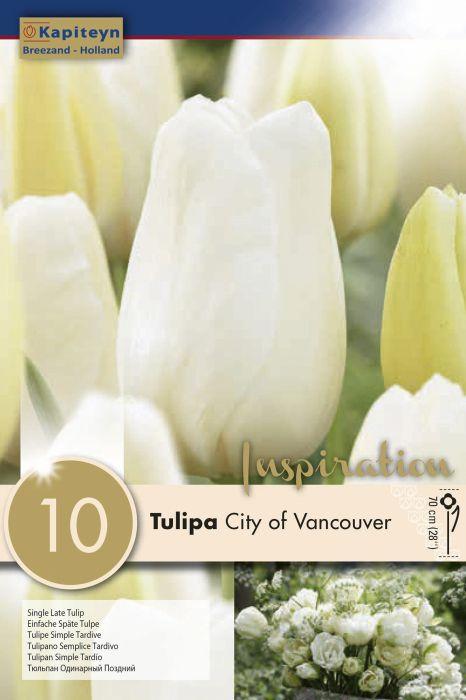 Syyskukkasipuli Tulppaani City of Vancouver 10 kpl