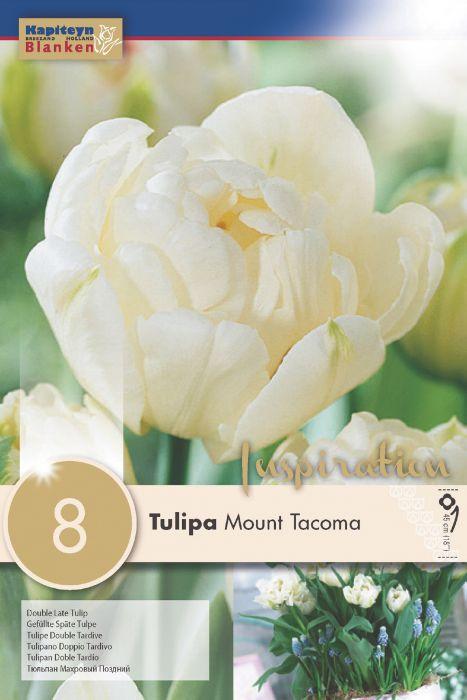Syyskukkasipuli Tulppaani Mount Tacoma 8 kpl