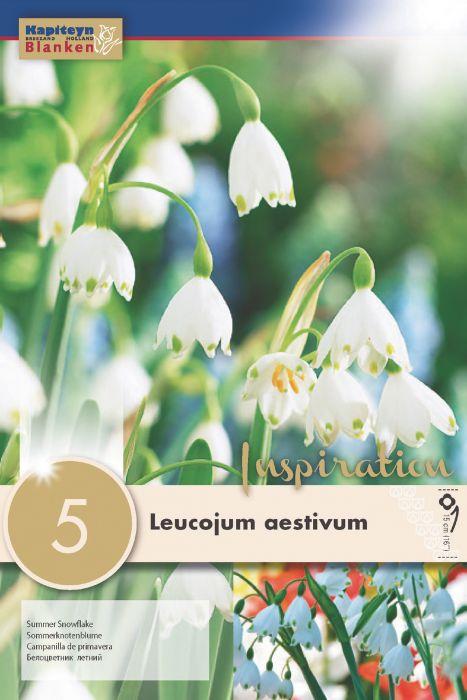 Syyskukkasipuli Kesälumipisara Leucojum Aestivum 5 kpl