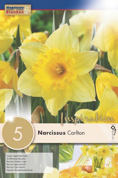 Syyskukkasipuli Narsissi Carlton 5 kpl