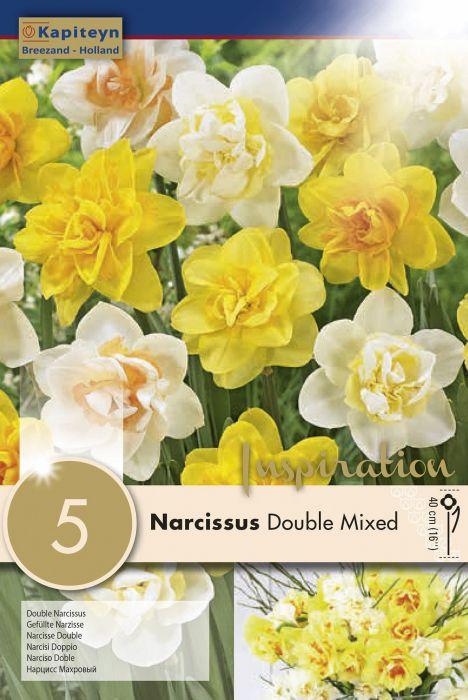 Syyskukkasipuli Narsissi Douple mixed 5 kpl