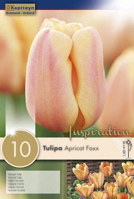 Syyskukkasipuli Tulppaani Apricot Foxx 10 kpl