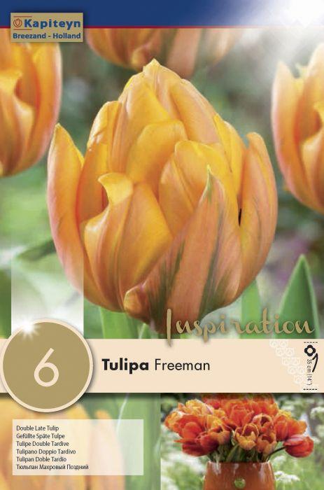 Syyskukkasipuli Tulppaani Douple Late Freeman 6 kpl