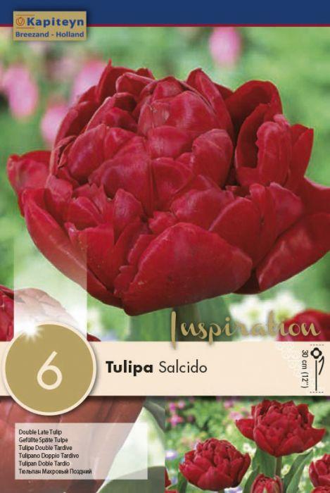 Syyskukkasipuli Tulppaani Double Late Salcido 8 kpl