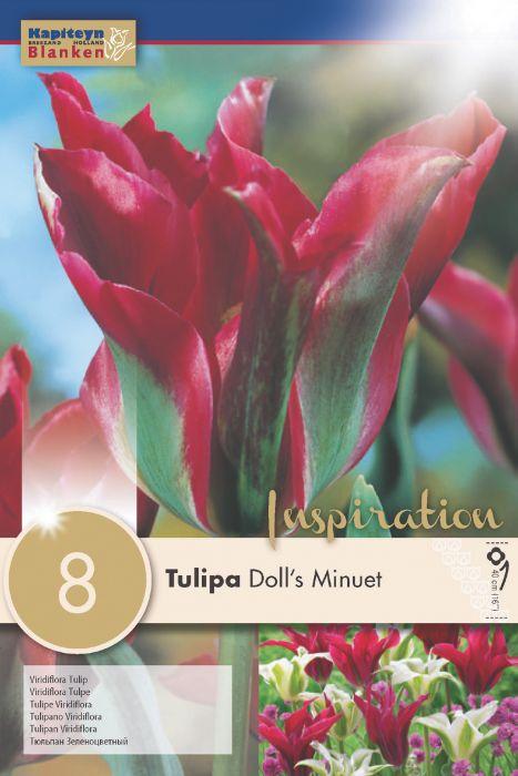 Syyskukkasipuli Tulppaani Viridiflora Doll's Minuet 8 kpl