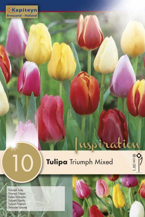 Syyskukkasipuli Tulppaani Triumph Mix 10 kpl