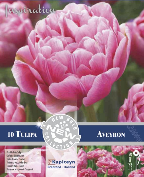 Syyskukkasipuli Tulppaani Double Late Aveyron 10 kpl
