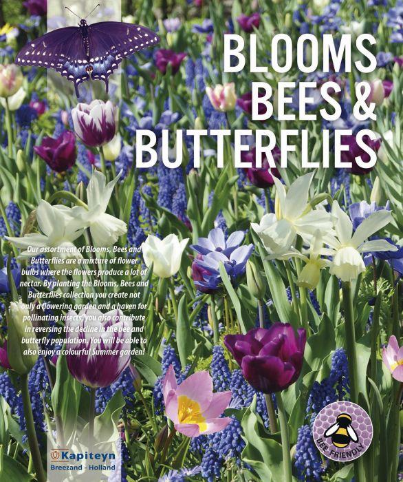 Kukkasipulilajitelma sinisävyinen 25 kpl