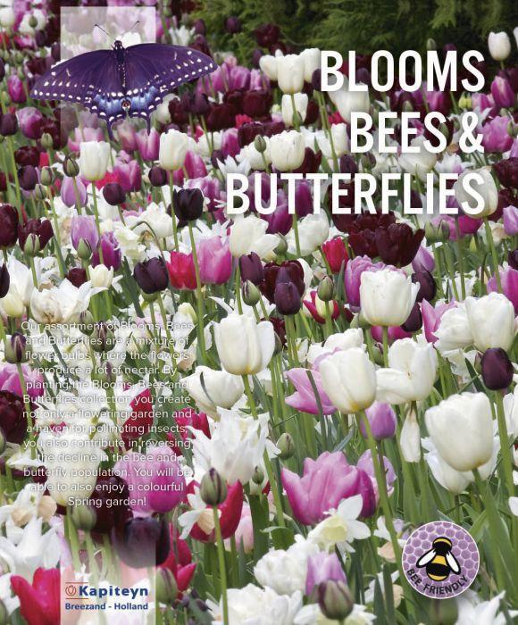 Kukkasipulilajitelma pinkkisävyinen 25 kpl