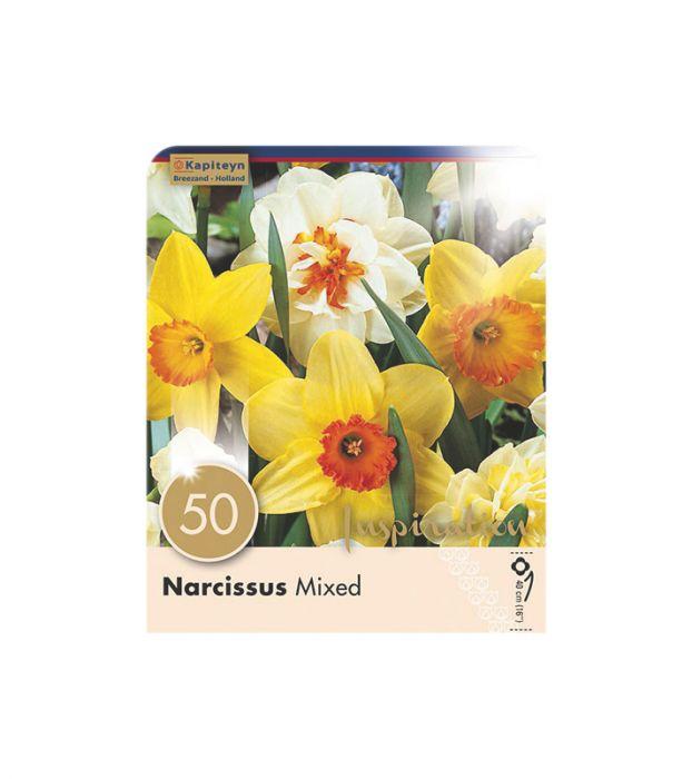 Syyskukkasipuli Narsissi mix 50 kpl