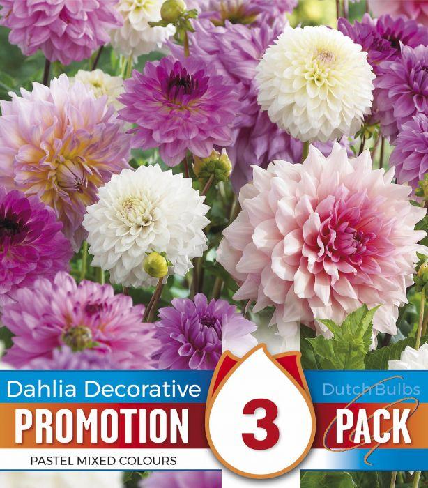 Kevätkukkasipuli Dahlia Decororative Pastel Colour Mix 3 kpl