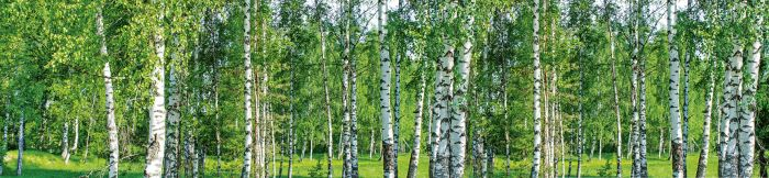 Välitilatarra Birch Grow 260 x 60 cm