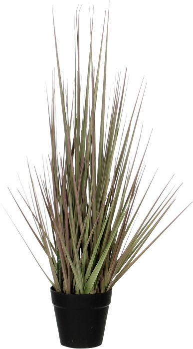 Silkkikasvi Heinä ruukussa purppura 53 cm