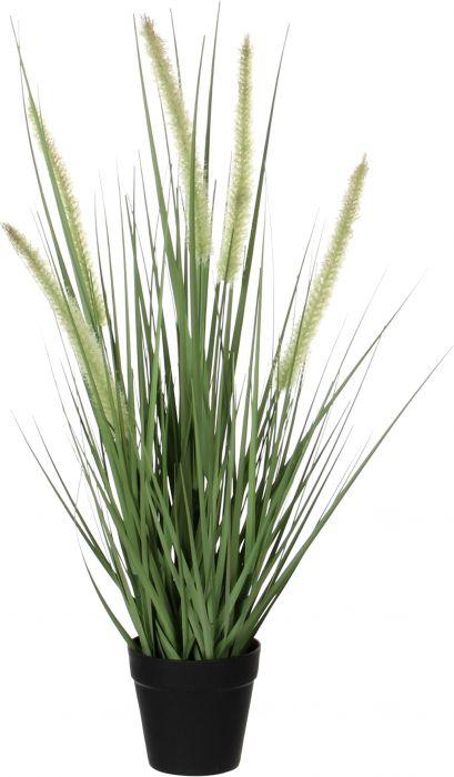 Silkkikasvi Heinä ruukussa vihreä 53 cm P10