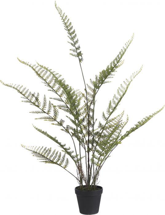 Silkkikasvi Saniainen Fern 91 cm
