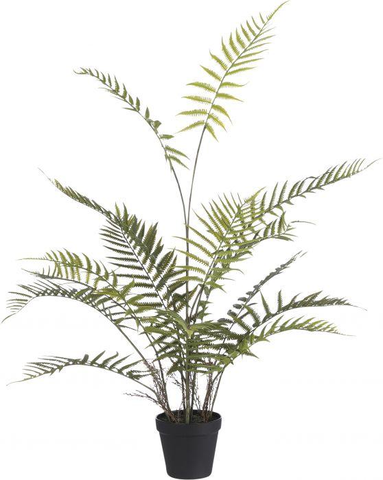 Silkkikasvi Saniainen Fern Adiantum 91 cm