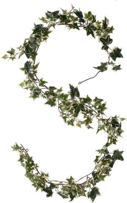 Silkkikasvi Murattiköynnös 180 cm