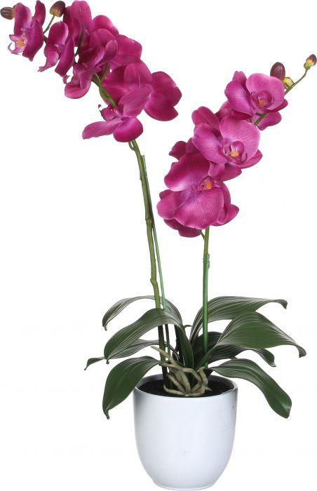 Silkkikasvi Perhosorkidea Violetti 66 cm