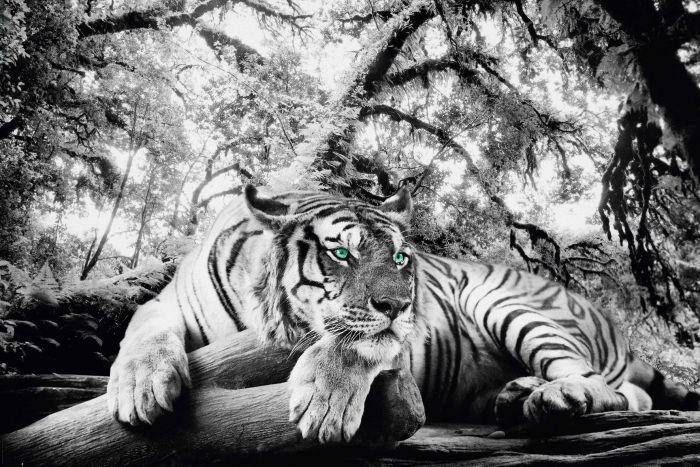 Sisustustaulu Reinders Tiger is watching you