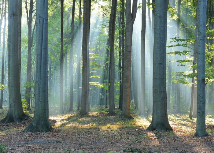 Sisustustaulu Reinders Forest in Sunlight