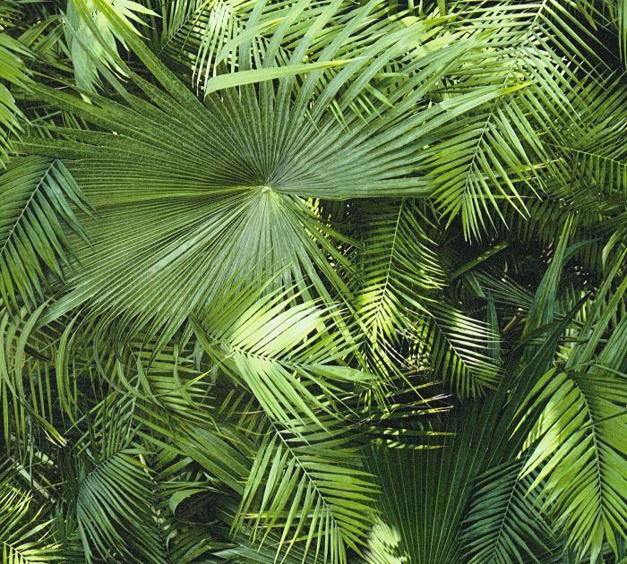 Kuitutapetti Bude Viidakko