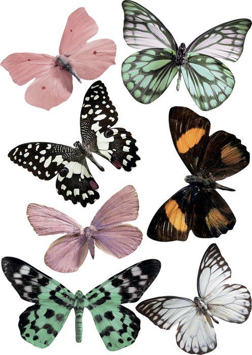 Seinätarra Plage 3D Kuultavat Perhoset