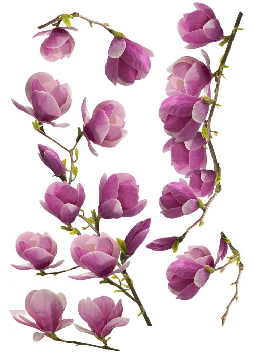 Julistetarra Plage Magnolia